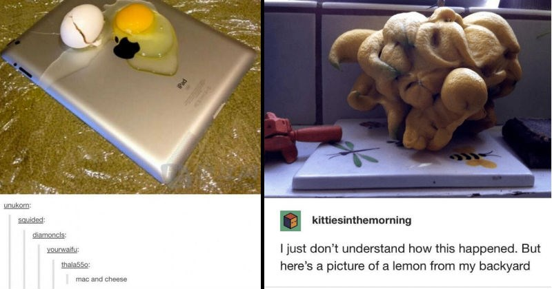 A collection of cursed Tumblr posts. | Packaged goods - unukorn: squided: diamoncls: yourwaifu: thala550: mac and cheese mac and cheese 's an egg 's an ipad iPad | Packaged goods - kittiesinthemorning just don't understand this happened. But here's picture lemon my backyard scientificperfection EVERLOVING FUCK buttpilgrim life gives iemons MAKE SACRIFICES