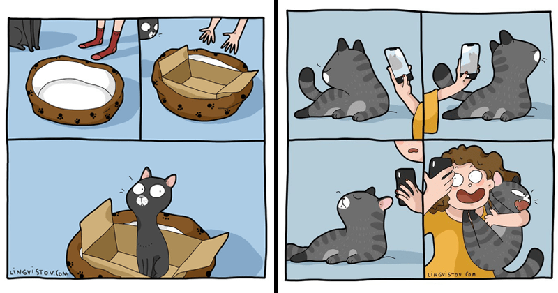 Funny and cute cat memes, kitten memes, cats, cat comics, felines | cartoon illustration putting a cardboard box inside a cat bed to get the cat to sleep in it | trying to take pics of a cat who refuses to look at the camera