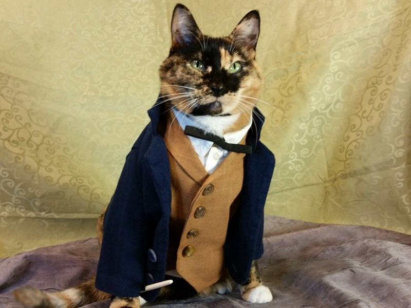 cat cosplay,fantastic beasts,Cats