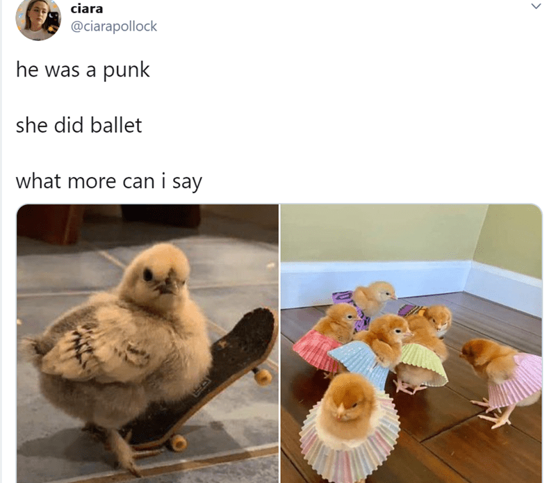 Funniest animal tweets | ciara @ciarapollock he punk she did ballet more can say baby chicken chicks with a tiny skateboard and wearing muffin liners as ballerina tutu skirts