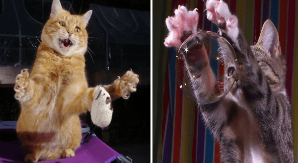 Photographer Amusingly Captures Animals In The Middle Of Doing Something   perfectly timed photo taken at the right moment orange cat dropping a toy mouse mid play and cat reaching to grab a floating soap bubble
