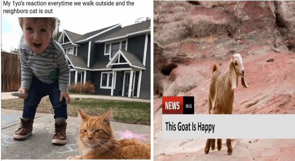 Wholesome animal memes | My 1yo's reaction everytime walk outside and neighbors cat is out happy baby next to a cat | NEWS 09:15 This Goat Is Happy cute kid baby goat