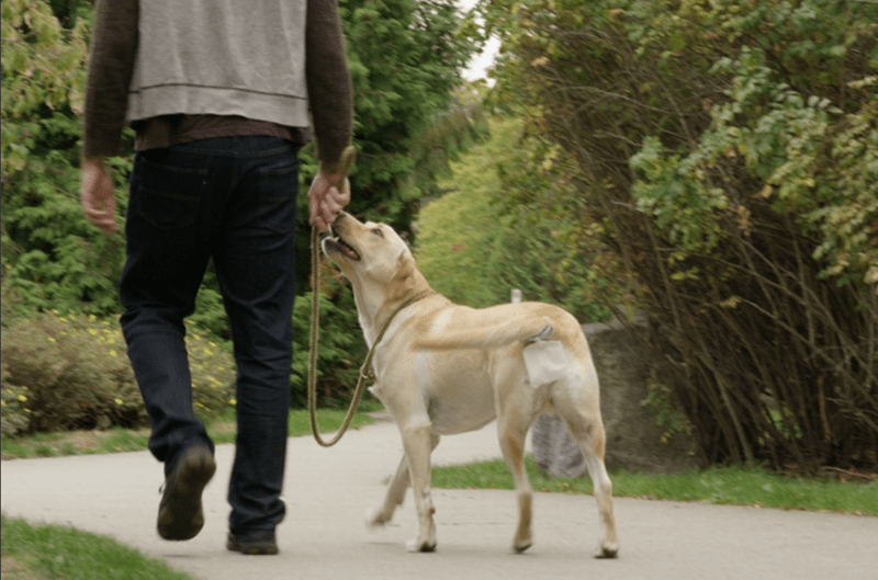 Gift of the Day: Dog Owners, Rejoice! The Hands Free Pooper Scooper