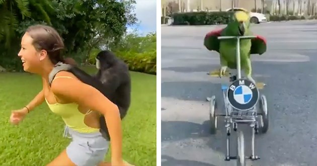 adventure animals gifs cute aww funny lol vids adorable | woman running with a monkey hanging to her back | funny green parrot riding a BMW scooter bike