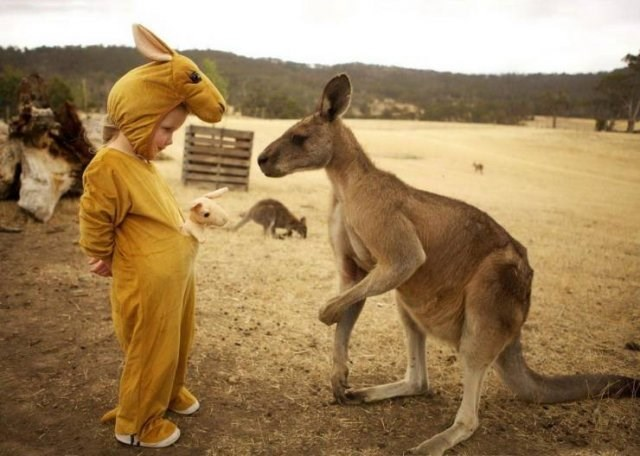 Amazing animal photos | child in a kangaroo costume with a baby joey plushie stuffed toy peeking from the front pocket standing in front of a real kangaroo