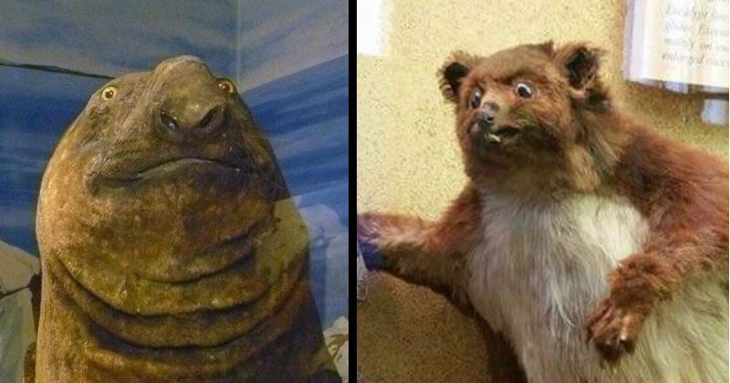 Awkward and bad taxidermy | creepy funny taxidermy manatee with a surprised expression on its face | weird bear gopher mammal cringe wtf scary