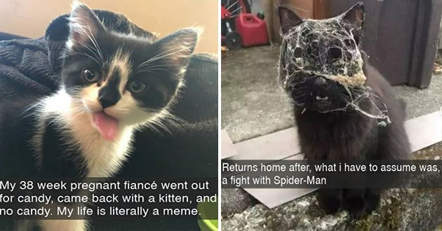 cat snaps snapchat funny cats aww cute lol animals wholesome | My 38 week pregnant fiancé went out candy, came back with kitten, and no candy. My life is literally meme. | Returns home after have assume fight with Spider-Man funny cat