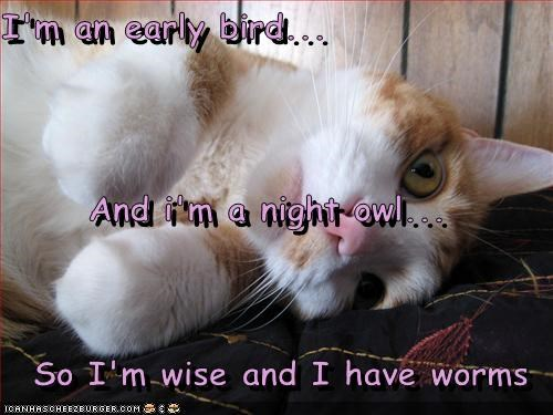 I M The Permanently Exhausted Pigeon Daily Lol Pics
