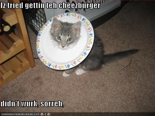 Cheezburger Image 1183211776