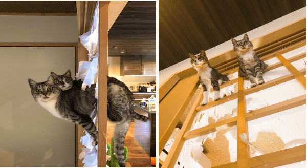 two cats who liked to break through traditional paper sliding doors in japan owner documents funny pics instances of cats destroying tearing and shredding through paper
