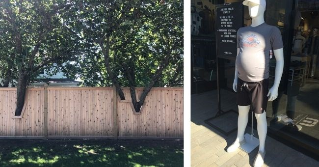mannequin with realistic body and fence built around trees