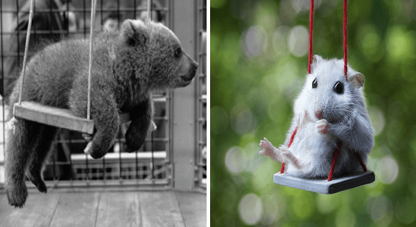 Animals Having Fun On Swings | cute baby bear cub hanging on a swing | little tiny mouse on a miniature swing
