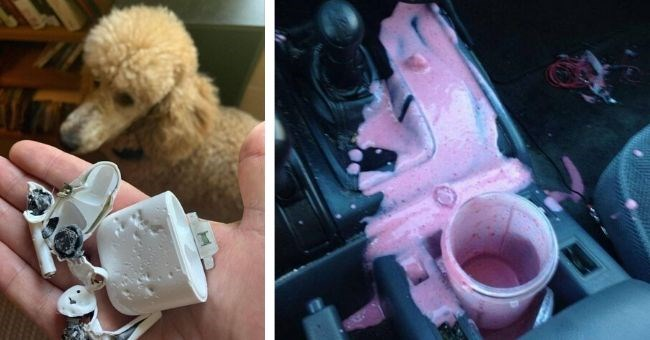 pictures of people having a bad day that can't get worse | airpods chewed up by poodle dog | smoothie spilled all over car console