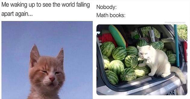 caturday cats memes funny cat lol animals cute aww | waking up see world falling apart again cat squinting its eyes | Nobody: Math books cabbagecatmemes angry cat in a car trunk filled with watermelons
