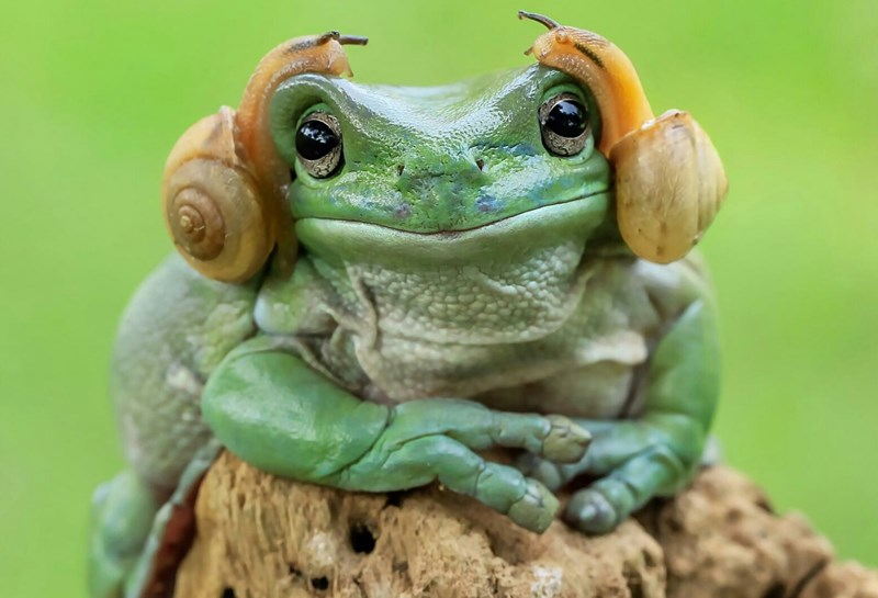 star wars photoshop battle funny Princess Leia frog - 1184261