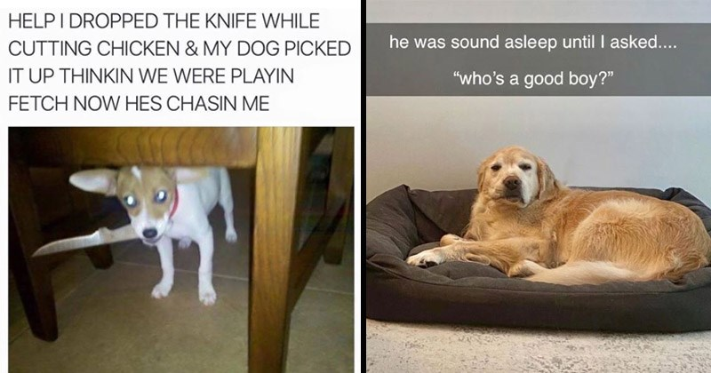 Funny and cute memes about dogs | HELP DROPPED KNIFE WHILE CUTTING CHICKEN MY DOG PICKED UP THINKIN WERE PLAYIN FETCH NOW HES CHASIN | he sound asleep until asked who's good boy? dog in a bed