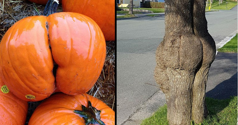 Funny things that look like butts | pumpkin with butt cheeks | tree trunk that is shaped like a buttocks
