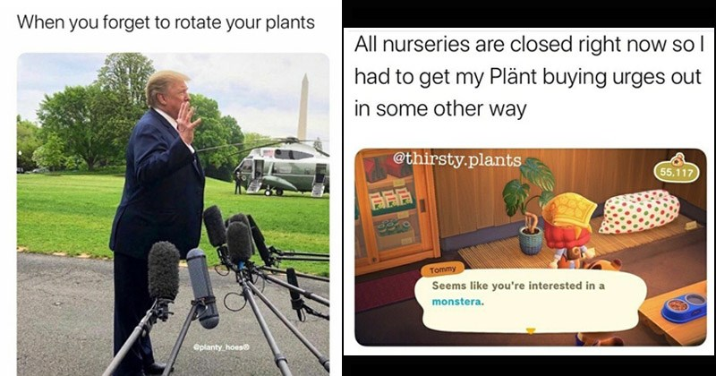 Funny memes about plants | Donald Trump leaning forward forget rotate plants @planty hoes | All nurseries are closed right now so l had get my Plänt buying urges out some other way @thirsty.plants 55,117 Tommy Seems like interested monstera. Animal Crossing
