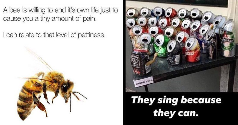 Funny random memes, tweets, and Tumblr posts | bee is willing end 's own life just cause tiny amount pain can relate level pettiness. | Heineken thank They sing because they can.