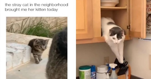 cats instagram videos funny cat lol awww animals adorable cute | stray cat neighborhood brought her kitten today | cat peeking out from a cupboard reaching for the knife rack