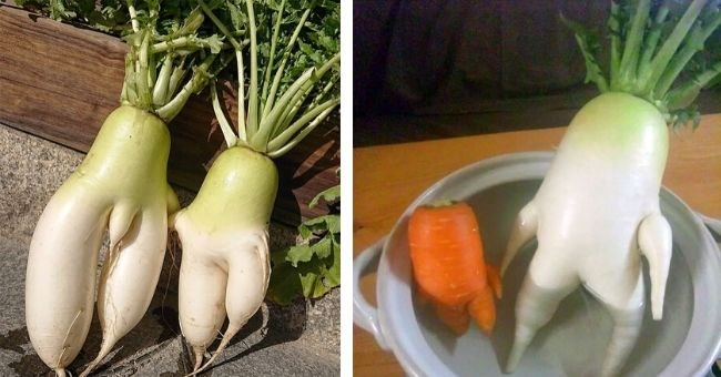 pictures of radishes in seductive poses | kinda sexy vegetables radishes and carrots with human looking legs thighs pot bathtub jacuzzi