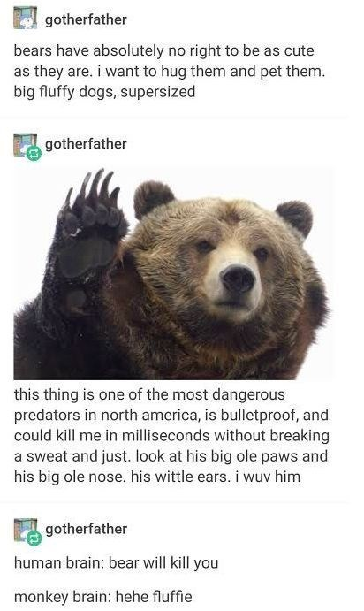 top ten 10 tumblr posts daily   gotherfather bears have absolutely no right be as cute as they are want hug them and pet them. big fluffy dogs, supersized gotherfather this thing is one most dangerous predators north america, is bulletproof, and could kill milliseconds without breaking sweat and just. look at his big ole paws and his big ole nose. his wittle ears wuv him gotherfather human brain: bear will kill monkey brain: hehe fluffie