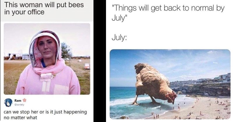 "Funny memes about animals | This woman will put bees office Ram @soriety can stop her or is just happening no matter | ""Things will get back normal by July"" July: giant chicken on a beach"