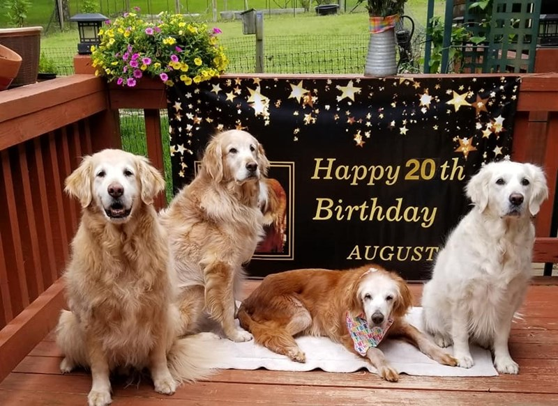 august oldest dog birthday Guinness world record aww animals dogs golden retriever | Happy 20th Birthday AUGUST four dogs posing with a sign