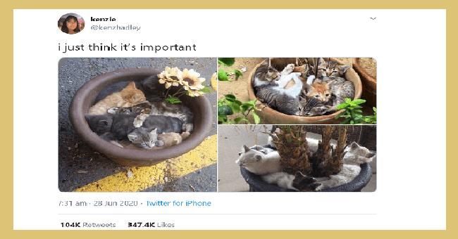 Pure Animal Tweets | kenzie @kenzhadley just think 's important 7:31 am 28 Jun 2020 Twitter iPhone 104K Retweets 347.4K Likes kittens sleeping inside flower pots