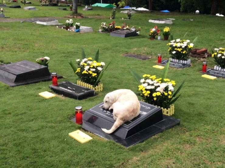 Amazing animal photos | good boy dog sleeping on a stone headstone in a graveyard