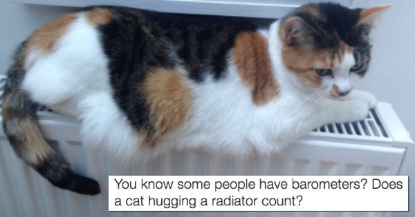 You Can Tell That Winter Is Coming Because Cats Everywhere Have Started Sleeping on Radiators