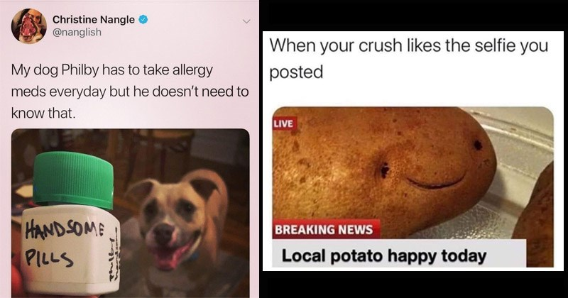 Funny random memes | Christine Nangle @nanglish My dog Philby has take allergy meds everyday but he doesn't need know HANDSOME PILLS | crush likes selfie posted LIVE BREAKING NEWS Local potato happy today