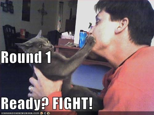 Round 1 Ready? FIGHT! - Cheezburger - Funny Memes | Funny
