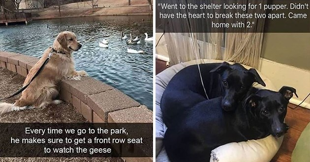 dogs doggo snap snapchat dog aww cute lol funny animals wholesome uplifting | Every time go park, he makes sure get front row seat watch geese dog leaning on a low wall surrounding a pond | Went shelter looking 1 pupper. Didn't have heart break these two apart. Came home with 2. two cute dogs cuddling