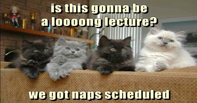 lolcats cat memes funny lol original animals cats cute aww | is this gonna be looong lecture got naps scheduled four fluffy kittens in different colors white black and grey sitting in a row