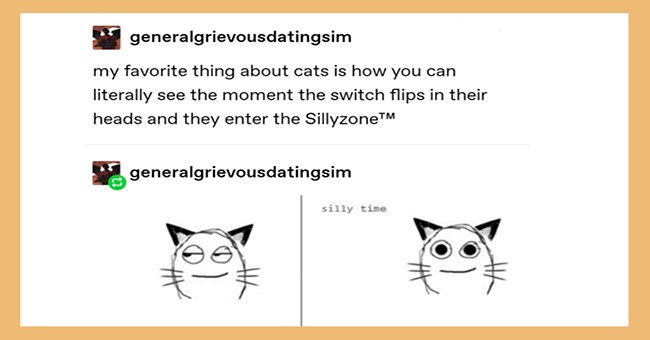 Tumblr posts about cats | showerthoughtsofficial O Save Maybe only cats can become ghost s why ghosts just knock over stuff and make noises at night.