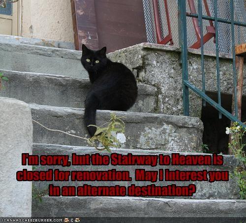 basement cat - 1189117184