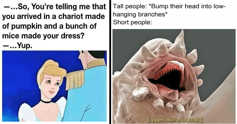 Funny random memes, cinderella, disney memes | So telling arrived chariot made pumpkin and bunch mice made dress Yup. Cinderella with red bloodshot eyes | Tall people Bump their head into low- hanging branches Short people laughs microscopically
