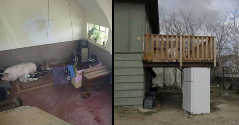 Bad real estate photos of creepy and gross houses | pig sleeping in a dirty room | makeshift porch held up by a fridge