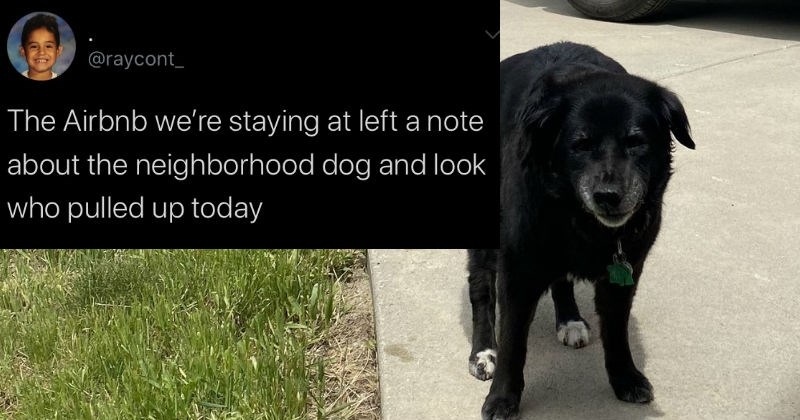Twitter thread about neighborhood dog that visits Airbnb | @raycont_ Airbnb staying at left note about neighborhood dog and look who pulled up today WELCOME Josie 3:07 am 30/6/20 Twitter iPhone cute black dog with a graying snout