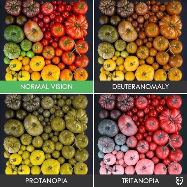 top ten daily infographics | Squash - NORMAL VISION DEUTERANOMALY PROTANOPIA TRITANOPIA