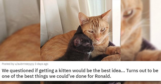 adopt adopted cats dogs kittens puppies animals pets aww rescue cute shelter love wholesome uplifting | We questioned if getting a kitten would be the best idea... Turns out to be one of the best things we could've done for Ronald