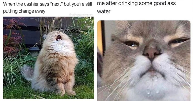 """cats memes funny caturday cat animals aww cute lol 