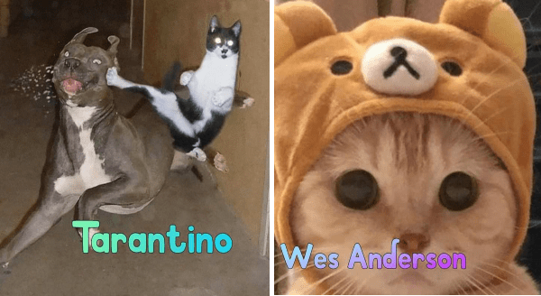Twitter User Presents Cat Versions Of Popular Movie Directors | Tarantino perfectly timed photo of a cat kicking a dog in mid air | Wes Anderson kitten with big round eyes wearing a bear cap