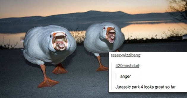 birds tumblr funny lol animals cute aww birb pics hilarious | two geese attacking rasec-wizzlbang: 420moshdad: anger Jurassic park 4 looks great so far S rasec-wizzibang Source: Fickr dirtyharrry 96,028 notes
