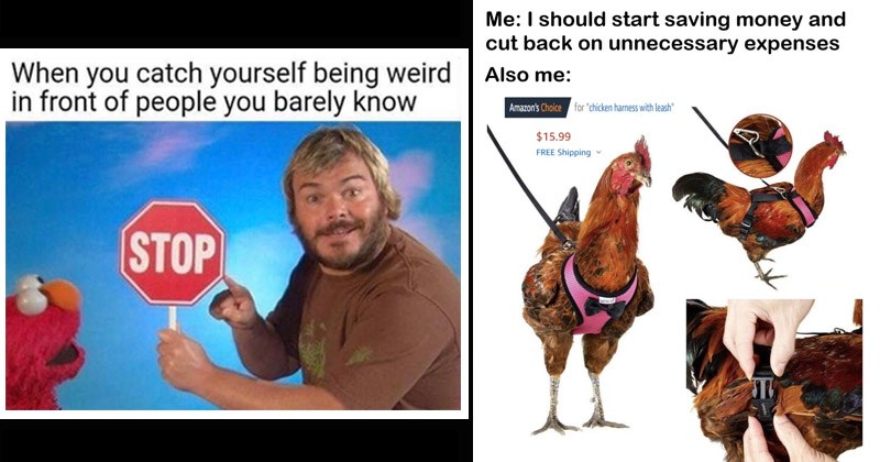 Funny random memes   catch yourself being weird front people barely know STOP Jack Black holding stop sign while Elmo watches   should start saving money and cut back on unnecessary expenses Also Amazon's Choice chicken harness with leash 15.99 FREE Shipping v uesid