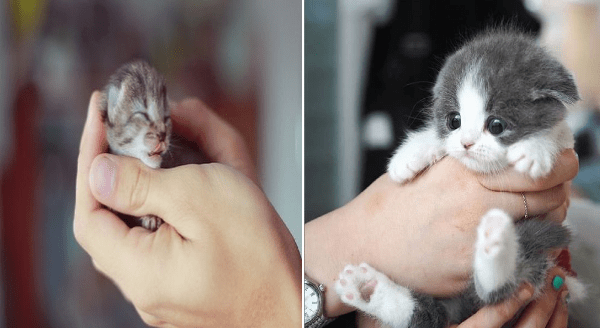 Adorable Kitties Gently Held By Loving Human Hands | tiny little newborn cat baby held in a person's palm and cute gray and white kitten picked up by a human