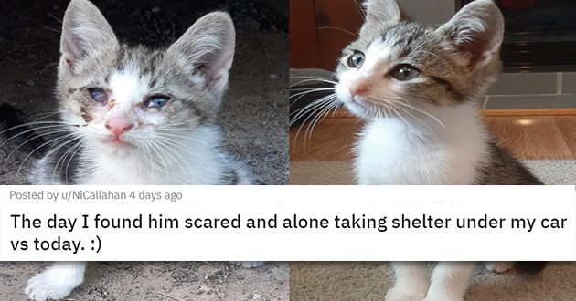 adopt adopted cats dogs kittens rescue shelter animals aww cute wholesome heartwarming adorable | glow up kitten adoption transformation The day I found him scared and alone taking shelter under my car vs today