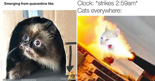 cats caturday funny memes meme cat aww lol cute hilarious pics animals | Emerging quarantine like @the_pizzacat @yohjikattamoto | Clock strikes 2:59am Cats everywhere pringles thecat night zoomies cat being shot out of a canon