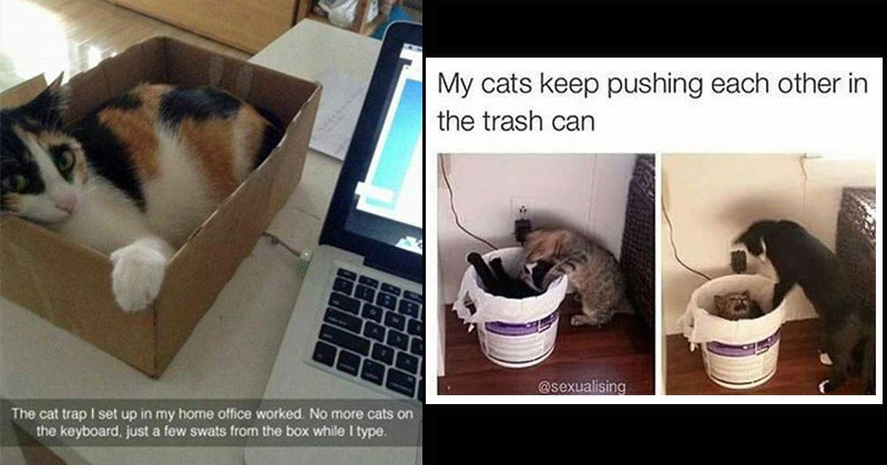 Funny memes about cats | cat trap set up my home office worked. No more cats on keyboard, just few swats box while type. cat in a cardboard box | My cats keep pushing each other trash can @sexualising